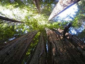 enhancedtrees